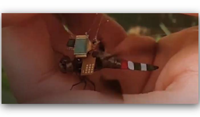 #أصغر حشرة جاسوسة في العالم ….